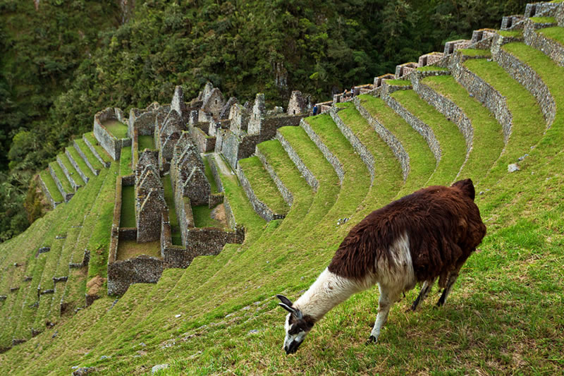 andenes camino inca Machu Picchu