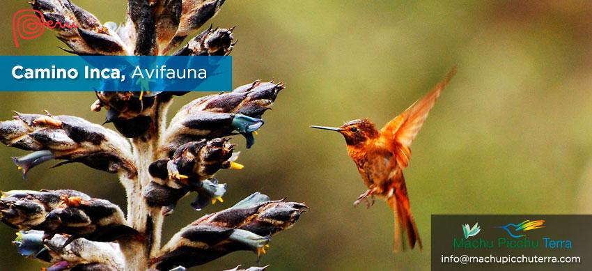 aves camino inca