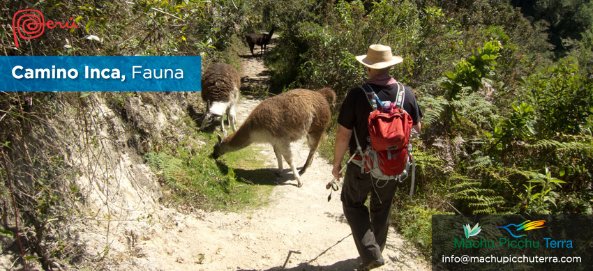 fauna camino inca
