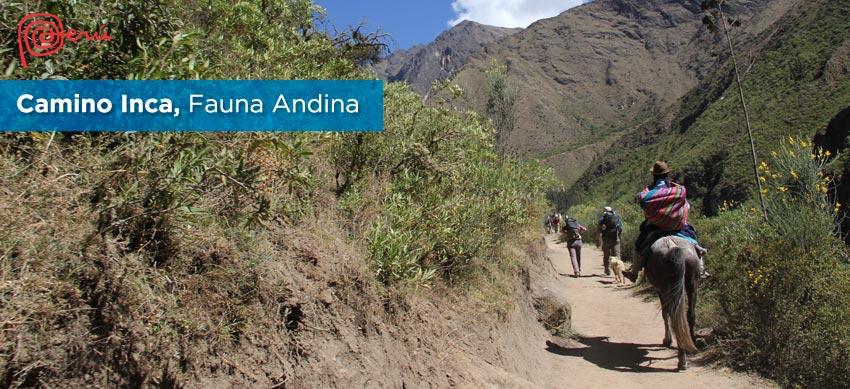 vida camino inca