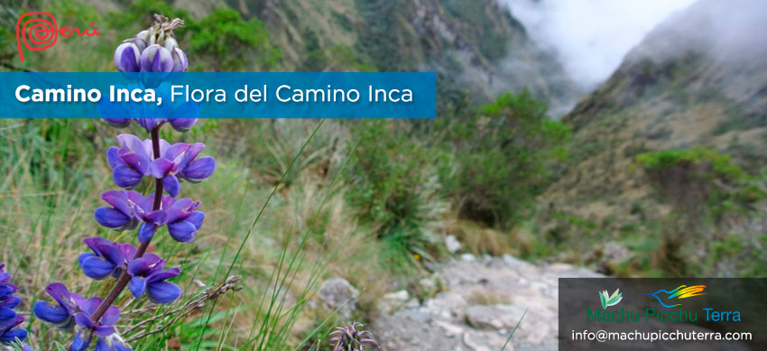 flora camino inca