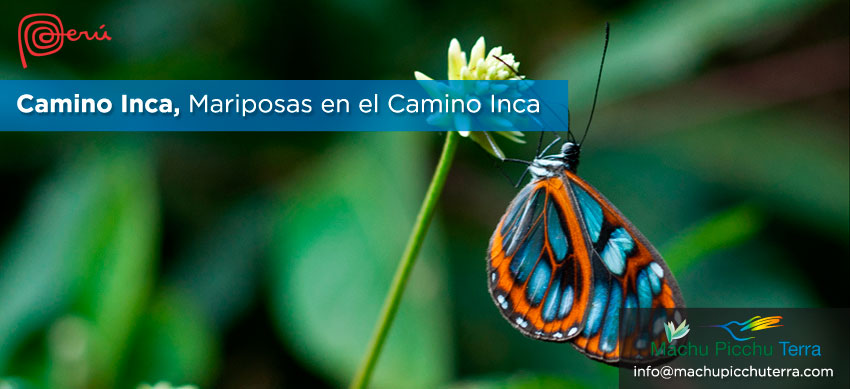 mariposas camino inca machu picchu