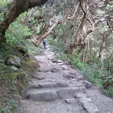 Camino Inca Machu Picchu Corto