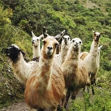 Fauna característica del Camino Inca