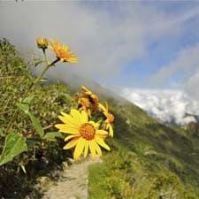 Megadiversidad en el Camino Inca